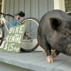 Petunia trying to rent some bikes... :)