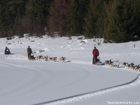 Dog Sledding  100 Mile House, Cariboo: Half Day Tour