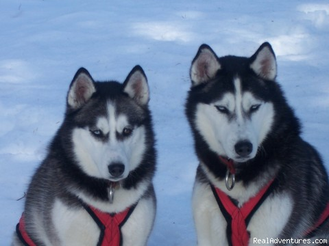 Meet The Team - Dog Sledding  100 Mile House, Cariboo