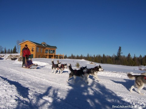 Fast & Furious Trail - Dog Sledding  100 Mile House, Cariboo