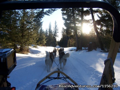 Life in the Dog Sled Basket ! - Dog Sledding  100 Mile House, Cariboo