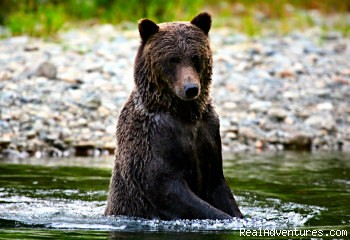 - Wilderness Tours & Accommodations in Bella Coola