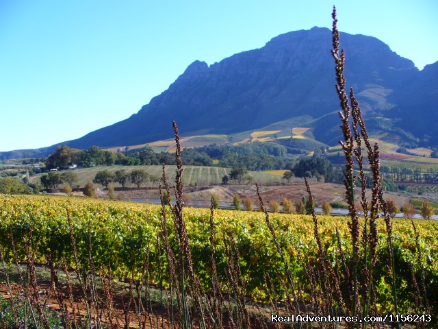 View from Graf Delaire Vineyard - Specialized Wine and Day Tours