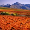 Specialized Wine and Day Tours Stellenbosch, South Africa Sight-Seeing Tours