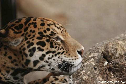 - Belize eco adventures & Luxury Travel