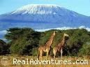 Mount Kilimanjaro Tanzania (#4 of 7) - Tanzania Safari - Serengeti & Ngorongoro Crater
