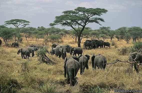 Kenya Tanzania Wildlife Safaris  Nairobi, Kenya Wildlife & Safari Tours