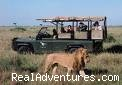 Kenya and Tanzania Wildlife Safaris - Kenya Tanzania Wildlife Safaris
