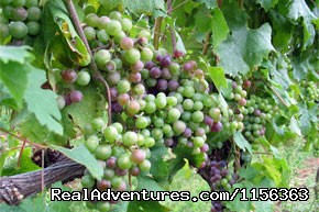 Image #3 of 14 - Vine University - Long Island Wine Making Class