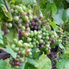 Vine University - Long Island Wine Making Class