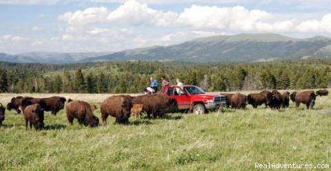 - Bison Quest bison and wildlife adventure vacations
