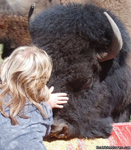Some moments defy description - Bison Quest bison and wildlife adventure vacations
