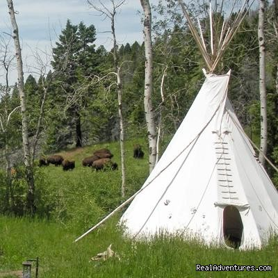The year 1810 or 2010? - Bison Quest bison and wildlife adventure vacations