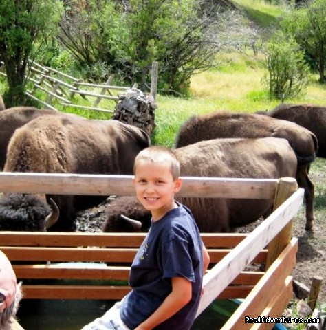 Surrounded by the herd at the watering hole - Bison Quest bison and wildlife adventure vacations