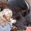 Bison Quest bison and wildlife adventure vacations