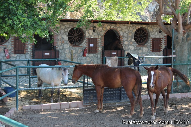 Isa.M Horseridingstable ISAM RANCH WELCOMES YOU