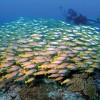 Zanzibar Beach Holiday & Mikumi National Park Mafia Diving