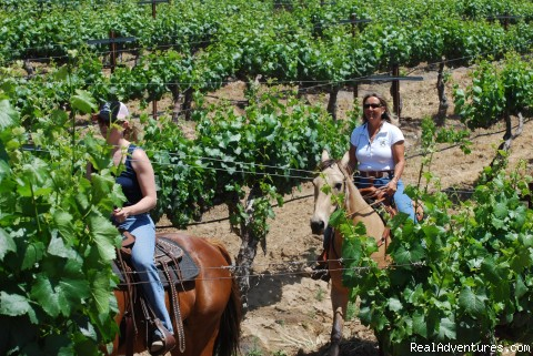 Riding in the vines. - Wine Country Horseback Riding in Temecula CA