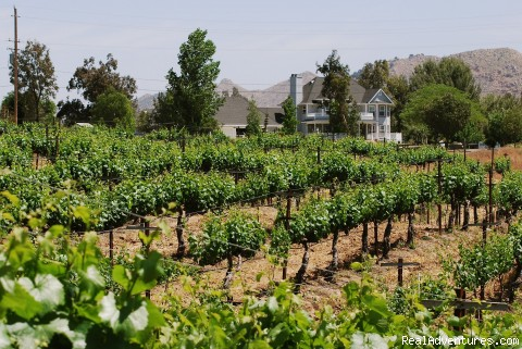 Vineyard Ride - Wine Country Horseback Riding in Temecula CA