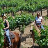Wine Country Horseback Riding in Temecula CA