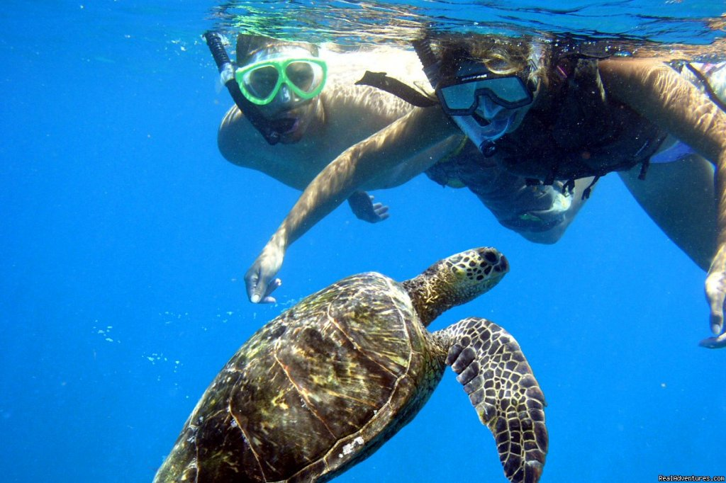Guided kayak and snorkeling tours along Maui's beautiful coastline.