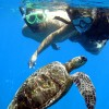 Maui's Best Kayak & Snorkel Tours , United States Kayaking & Canoeing