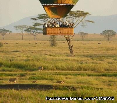 Image #7 of 21 - Adventure Penfam tours Kenya-Tanzania Safaris