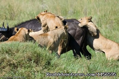 Image #14 of 21 - Adventure Penfam tours Kenya-Tanzania Safaris