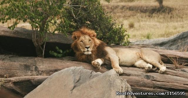 Image #18 of 21 - Adventure Penfam tours Kenya-Tanzania Safaris