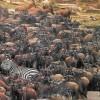 Adventure Penfam Tours Kenya-Tanzania Safaris