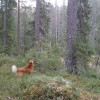 A barking tree dog at work