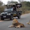 Nhongo Safaris (Kruger National Park Safaris)