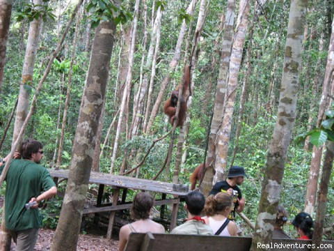 Magical borneo adventure tours: