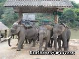 - A Thai Village Home Stay for Cultural Experience.