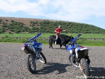 A yak is the chosen vehicle, Arkhangai Province (#4 of 6) - Bike Mongolia - Freedom Unlimited