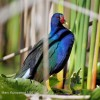 Birding, Eco and Kayak Tours in Central Florida Orlando, Florida Eco Tours