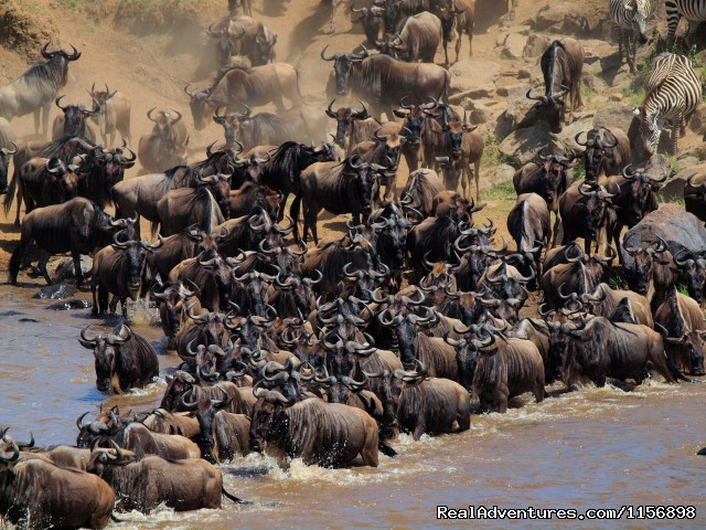 Wildebeest Migration - Kenya Wildebeest Migration Safari offer 2013