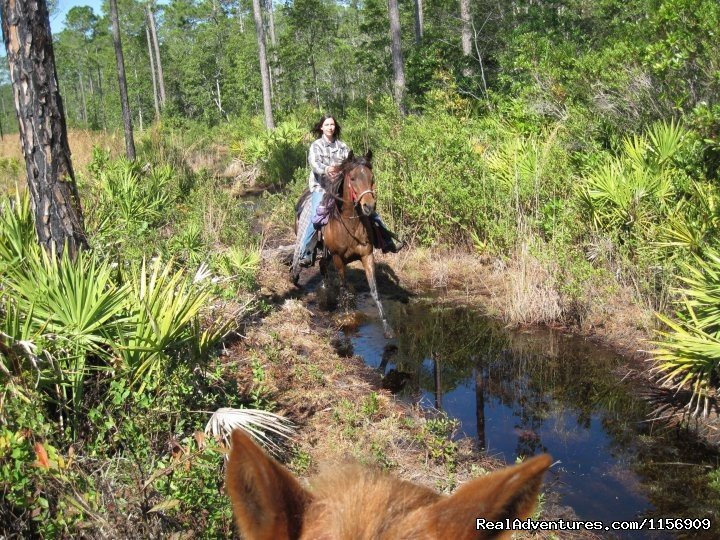 Image #5/24 | Horseback Riding Near Ocala Florida