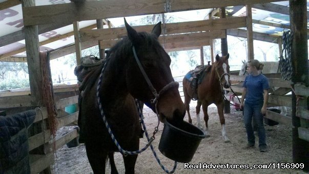 Image #11/24 | Horseback Riding Near Ocala Florida