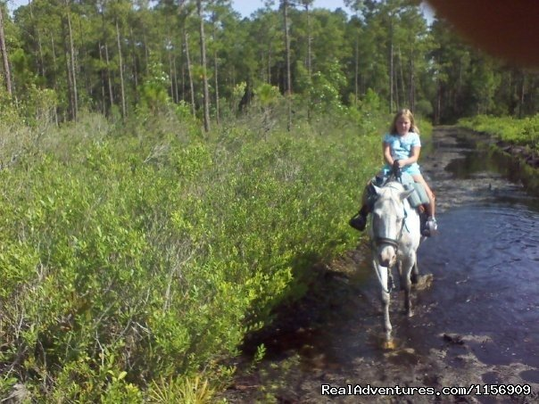 Image #16/24 | Horseback Riding Near Ocala Florida