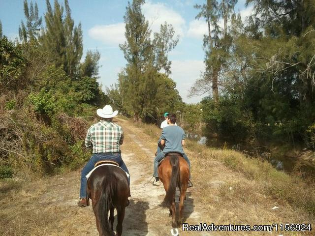 The Ultimate Horseback Riding Adventure Horseback Riding Florida