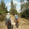 The Ultimate Horseback Riding Adventure