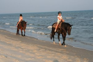 Two-bit Stable Horseback Riding on the Beach Horseback Riding Port St. Joe, Florida