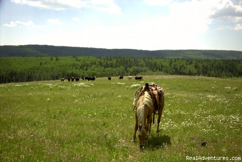 - Colorado Cowboy Vacation at Fish and Cross Ranch
