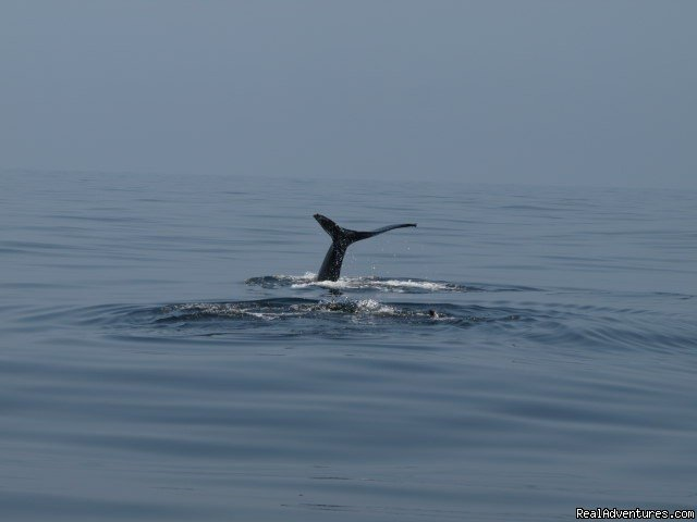 Image #10/19 | San Francisco whale tours
