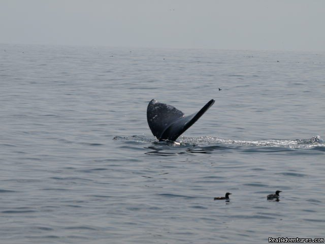 Image #12/19 | San Francisco whale tours