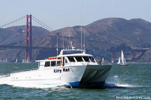 San Francisco whale tours