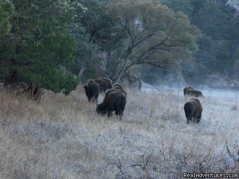 Buffalo by Bunkhouse | Image #13/16 | Remote Conservation Ranch By Copper Canyon Region