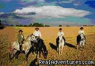 Valensole (#7 of 8) - Cap Rando - Horseback Riding Vacations In Provence