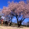 Cap Rando - Horseback Riding Vacations In Provence Lauris, France Horseback Riding